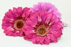 Three Pink Gerbera Stock Photo