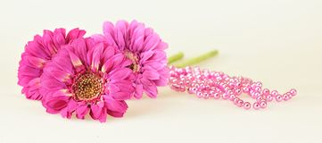Three Pink Gerbera Royalty Free Stock Images