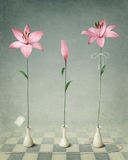 Three pink lily Royalty Free Stock Photography
