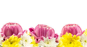 Three pink lotus blossom and chrysanthemum flower Stock Image