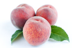 Three pink peach and green leaves Royalty Free Stock Photos