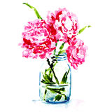 Three pink peonies in vase isolated Stock Images