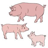 Three pink pigs. Big Pig, Sow and Piglet, cartoon vector illustrations isolated on the white background Royalty Free Stock Image