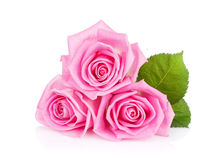 Three pink rose flowers. Isolated on white background Stock Photography