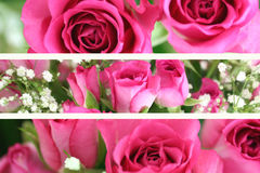 Three Pink Rose Landscape Images. Three pink roses and gypsophila bouquet close up images royalty free stock images