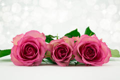 Three pink roses. Three pink roses on a diffused sparkle background Stock Photos