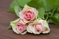 Three pink roses Stock Images