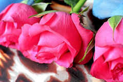 Three pink roses on a scarf with leopard pattern. And a blue scarf, fashion, accessories Royalty Free Stock Photography