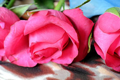 Three pink roses on a scarf with leopard pattern. And a blue scarf, fashion, accessories Stock Photos