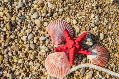 Three pink seashells and starfish lie on multi-colored pebbles. Pink shells starfish lying on the beach royalty free stock image
