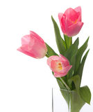 Three pink tulips Royalty Free Stock Image