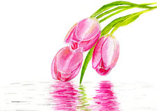 Three pink tulips Royalty Free Stock Photography
