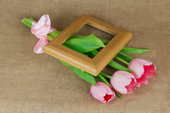 Three pink tulips with satin ribbon and wooden frame Stock Photos