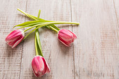 Three Pink Tulips on Wood Background. With room for text Stock Photos
