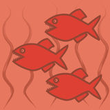 Three piranhas royalty free stock image