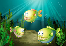 Three piranhas under the sea with seaweeds. Illustration of the three piranhas under the sea with seaweeds Stock Photo