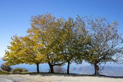 Three plane trees standing on the edge of the hill. Below view of the sea and mountains. Greece stock image