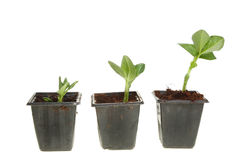 Three plant seedlings Stock Photos