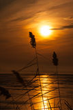 Three plant silhouettes in sunset reflection Royalty Free Stock Photography