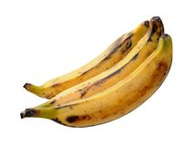 Three plantain bananas Royalty Free Stock Image