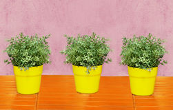 Three plants Royalty Free Stock Images