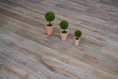 Three plants on the floor. In an empty room Royalty Free Stock Photo