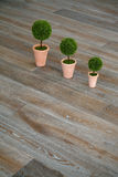 Three plants on the floor. In an empty room Royalty Free Stock Photos