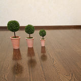 Three plants on the floor. In an empty room Stock Photography