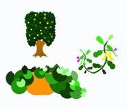 Three plants Stock Image