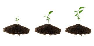 Three plants green Royalty Free Stock Photography