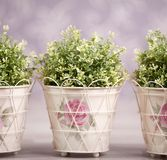 Three plants in ornamented flowerpots Stock Images