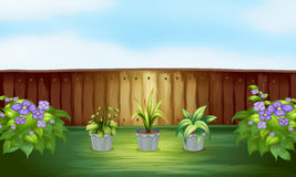 Three plants in a pot inside the fence Royalty Free Stock Image