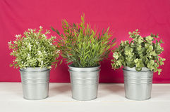 Three plants on a wooden table royalty free stock photo