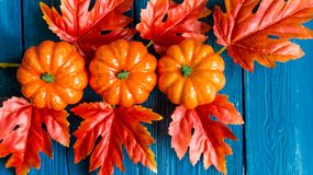 Three plastic pumpkins and red leaves fall concept Stock Photos