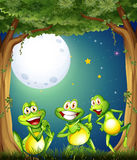Three playful frogs playing at the woods Royalty Free Stock Photography