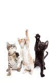Three Playful Kittens Vertical Banner Stock Photos