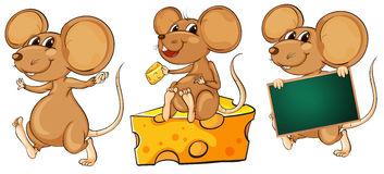Three playful mice. Illustration of the three playful mice on a white background stock illustration