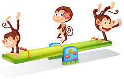 Three playful monkeys playing with the seesaw Royalty Free Stock Photography