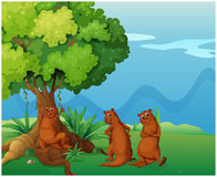 Three playful wild animals near the big old tree Royalty Free Stock Image