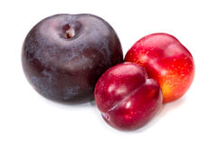 Three plums Stock Images