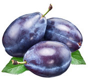 Three plums with leaf. Stock Photography