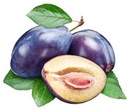 Three plums with leaf. Stock Image