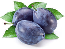Three plums with leaf. Royalty Free Stock Images