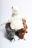 Three plush mouses. Three mouses on the white background royalty free stock photography