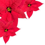 Three pointsettias in corner, top view, border decoration on white background stock photos