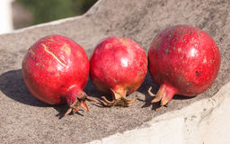 Three pomegranates in sun shine Stock Image