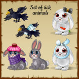 Three poor sick and healthy animals Royalty Free Stock Photography