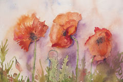 Three poppies painted with watercolor Stock Photography