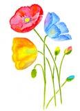 Three poppy Stock Images