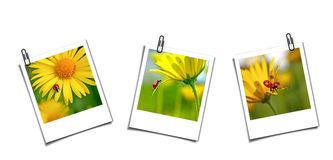 Three postcards with ladybugs Royalty Free Stock Photo